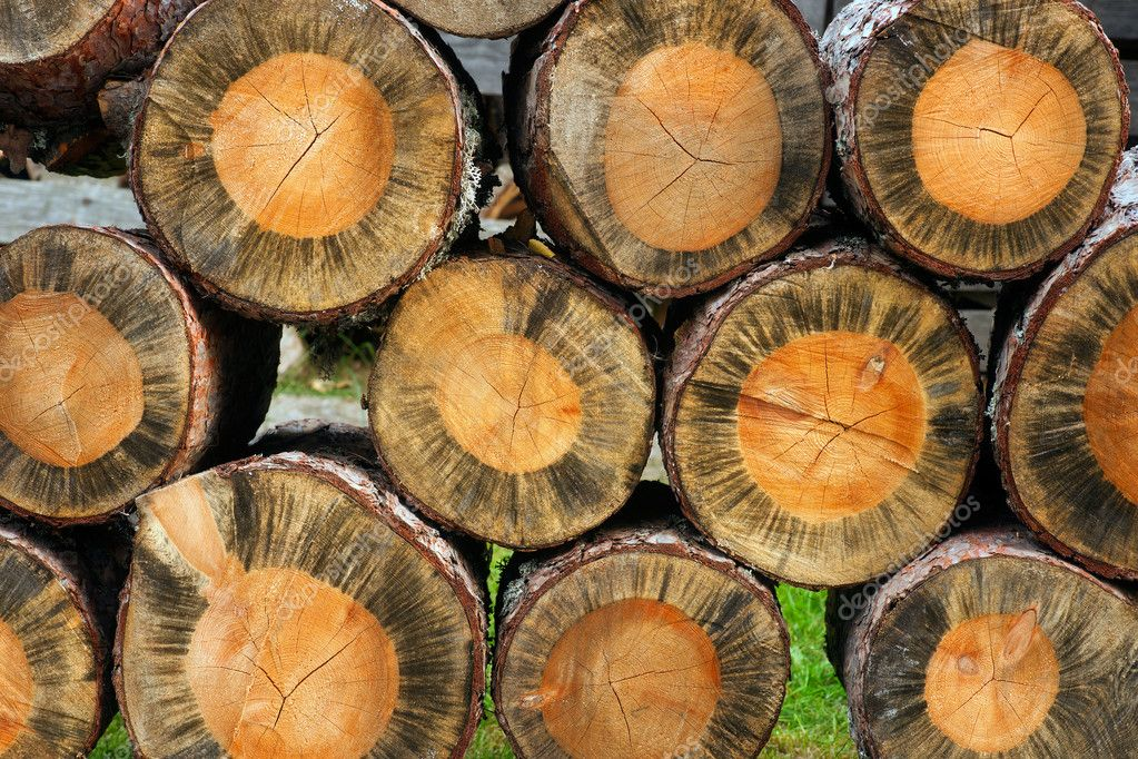 Background of cross section of cut old trees in a pile — Stock Photo #7186540