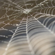 Stock Photo: Cobweb