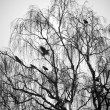 Trees with birds — Stock Photo
