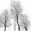 Bare trees with hoar frost — Stock Photo