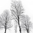 Stock Photo: Bare trees with hoar frost