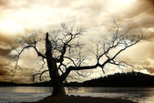 Silhouette of bare tree — Stock Photo