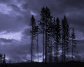Scary trees — Stock Photo