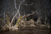 Scary landscape with dead tree — Stock Photo