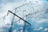 Electricity pylon with birds — Stock Photo