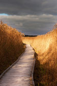 Wooden pathway in reeds — Stock Photo