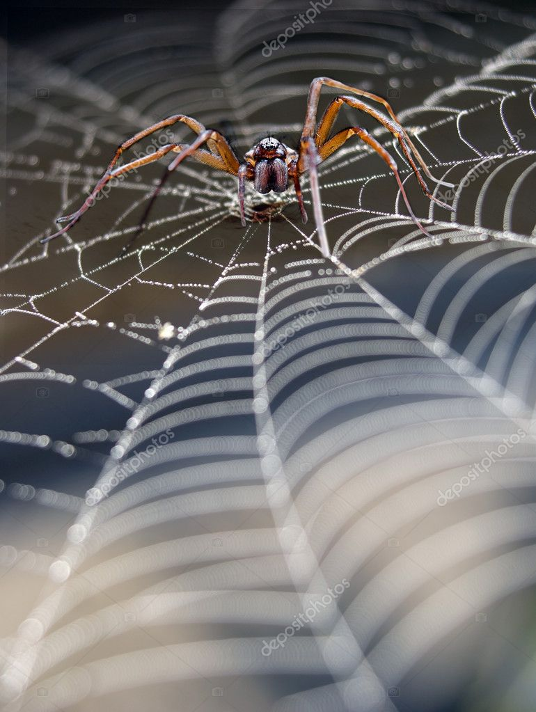 Close up of cobweb with spider — Stock Photo #7196184