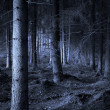 Spooky forest - Stock Photo