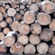 Log pile — Stock Photo #7214647