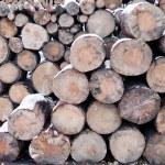 Log pile — Stock Photo