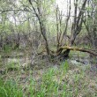 Stock Photo: Swamp arewith tree