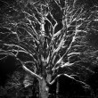 Tree at night — Stock Photo