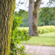 Trees in a park - Stock Photo