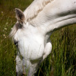 White horse — Stock Photo #7216270