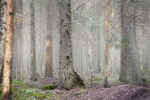 Forest in fog — Stock Photo