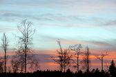 árboles desnudos en la noche — Foto de Stock