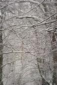 Bosque de sepia — Foto de Stock