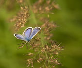 Purple butterfly — Stock Photo