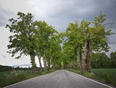 Rural avenue — Stockfoto