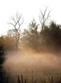 Early morning mist — Стоковое фото