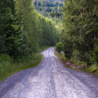 Dirt road in forest — Stock Photo
