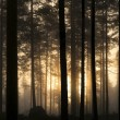 Постер, плакат: Sunset in foggy forest