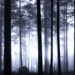 Sunset in foggy forest — Stock Photo #7239034