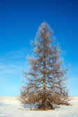 Bare tree in winter — Foto Stock
