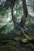 Magic forest — Stock Photo