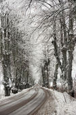 Avenue in snow — Stock Photo