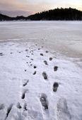 在冰上的脚步声 — 图库照片