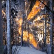 Sunlight in winter forest — Stock Photo