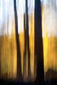 Abstraktní podzimní les — Stock fotografie