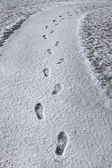 Footprints in new snow — Stock Photo