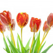 Tulips — Stock Photo #7424503