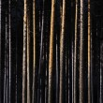 Tree trunks — Stock Photo