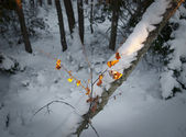 Sunshine on leaves on winter — Foto Stock