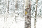árbol en invierno — Foto de Stock