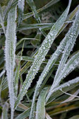 Cristaux de glace sur l'herbe — Photo