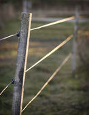 Electric fence — Stock Photo