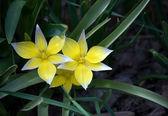 Fiori gialli in primavera — Foto Stock