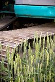 Bulldozer in wheat field — Stock Photo
