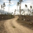 Stock Photo: Dirt road in clearing