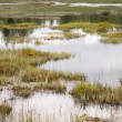 Wetland — Stock Photo #7542972