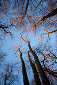 Low angle view of bare trees in winter — Stock Photo