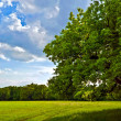 Tree in a field under the sun — Stock Photo