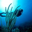 Scuba diver on a tropical reef — Foto Stock