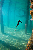 A seahorse under a wharf in Honduras — Stock Photo
