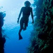 Carribean freediver — Stock Photo