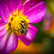 Stock Photo: Bee on flower